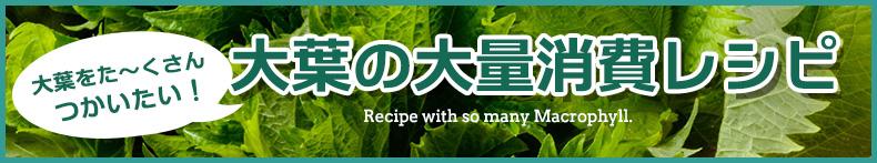 大葉の大量消費レシピ